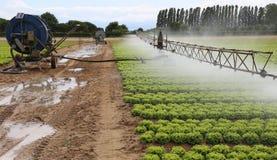 一个莴苣领域的自动灌溉系统在夏天 免版税图库摄影