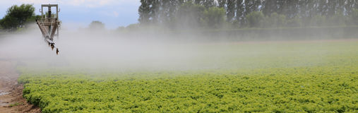 一个莴苣领域的自动灌溉系统在夏天 库存照片