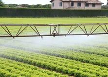 一个莴苣领域的自动灌溉系统在夏天 免版税库存照片