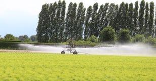 一个莴苣领域的自动灌溉系统在夏天 免版税库存图片