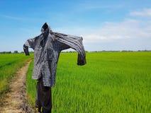 一个稻草人的剪影在领域的 免版税库存图片