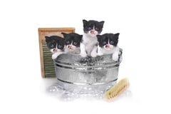 洗一个洗衣盆的小猫巴恩与刷子和泡影 免版税库存图片