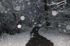 一串多雪的冬天森林和足迹 库存照片