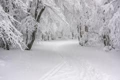 一串多雪的足迹在森林里 免版税库存图片