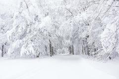 一串多雪的足迹在森林里 库存图片