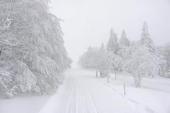 一串多雪的足迹在森林里 库存照片