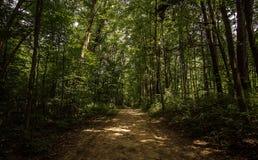 一串树木繁茂的密执安足迹 库存照片