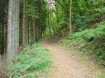 一串森林足迹在卢森堡 免版税库存照片