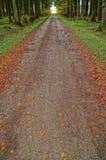 一串森林足迹在秋天 免版税库存照片