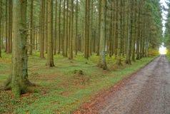 一串森林足迹在秋天 库存图片