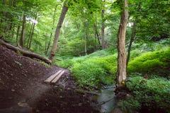 一串泥泞的足迹跟随一条小小河 免版税库存照片