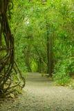 一串足迹的看法在森林公园里面的在克赖斯特切奇新西兰 免版税库存图片
