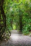 一串足迹的看法在森林公园里面的在克赖斯特切奇新西兰 免版税图库摄影