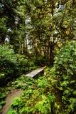 一串足迹通过密集的西北沿海森林 免版税库存照片