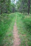 长的森林足迹 免版税图库摄影