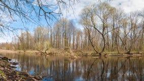 一些反弹严格晴朗那里不是的蓝色云彩日由于域重点充分的绿色横向小的移动工厂显示天空是麦子白色风 有树的一条森林河在海岸 免版税库存照片