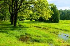 一些反弹严格晴朗那里不是的蓝色云彩日由于域重点充分的绿色横向小的移动工厂显示天空是麦子白色风 绿色树和被充斥的春天草坪在晴朗的天气的公园 免版税库存图片