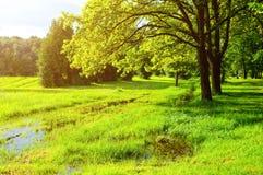 一些反弹严格晴朗那里不是的蓝色云彩日由于域重点充分的绿色横向小的移动工厂显示天空是麦子白色风 绿色公园树和被充斥的春天草坪在晴朗的天气的公园 库存照片