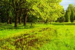一些反弹严格晴朗那里不是的蓝色云彩日由于域重点充分的绿色横向小的移动工厂显示天空是麦子白色风 绿色树和被充斥的春天草坪在公园在晴天 免版税库存照片
