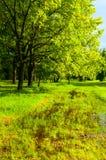一些反弹严格晴朗那里不是的蓝色云彩日由于域重点充分的绿色横向小的移动工厂显示天空是麦子白色风 在公园停放树和被充斥的春天草坪在晴天 库存图片