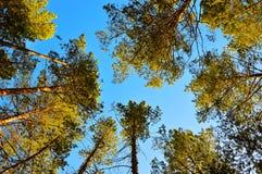 一些反弹严格晴朗那里不是的蓝色云彩日由于域重点充分的绿色横向小的移动工厂显示天空是麦子白色风 杉木倾斜在我 底视图 免版税库存照片