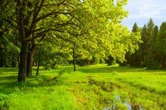 一些反弹严格晴朗那里不是的蓝色云彩日由于域重点充分的绿色横向小的移动工厂显示天空是麦子白色风 绿色树和被充斥的春天草坪在公园在晴天 免版税图库摄影