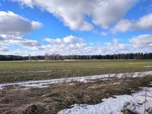 一些反弹严格晴朗那里不是的蓝色云彩日由于域重点充分的绿色横向小的移动工厂显示天空是麦子白色风 图库摄影