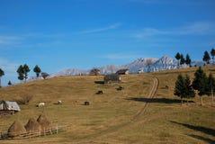 一些反弹严格晴朗那里不是的蓝色云彩日由于域重点充分的绿色横向小的移动工厂显示天空是麦子白色风 在罗马尼亚语喀尔巴汗的Beautifull场面 免版税库存照片