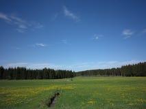一些反弹严格晴朗那里不是的蓝色云彩日由于域重点充分的绿色横向小的移动工厂显示天空是麦子白色风 免版税库存图片
