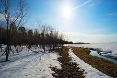 一些反弹严格晴朗那里不是的蓝色云彩日由于域重点充分的绿色横向小的移动工厂显示天空是麦子白色风 西伯利亚, Yugra 图库摄影