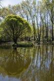 一些反弹严格晴朗那里不是的蓝色云彩日由于域重点充分的绿色横向小的移动工厂显示天空是麦子白色风 杨柳和白杨树在u池塘反射 免版税图库摄影
