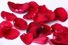 一些在白色背景的玫瑰色叶子 免版税图库摄影