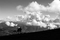 一些小的树和一个风向袋在Subasio山Umb顶部 图库摄影
