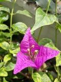 一些未知的花在我的庭院里 免版税库存照片