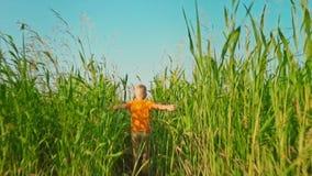 一件明亮的橙色T恤杉的一个男孩遇到与高绿草的一个领域,孩子耗尽他的胳膊遇见蓝色 影视素材