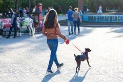 一件棕色夹克的一少女在很大数量的人中的公园走有在一条红色皮带的一条短毛猎犬狗的在温暖 库存照片