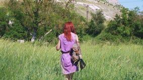 一件淡紫色礼服的红发女孩,有背包和袋子的医药草本通过一个象草的草甸走 股票视频