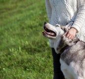 一件白色毛线衣和黑牛仔裤的女孩在狗阿拉斯加的爱斯基摩狗旁边站立 免版税库存照片