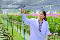 一件白色礼服的一位年轻女人研究员和在种植新的兰花前探索庭院 免版税库存图片