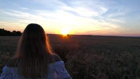 一件白色礼服的浪漫女孩走在金黄麦田的在阳光下 库存图片