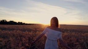 一件白色礼服的浪漫女孩走在金黄麦田的在阳光下 免版税库存图片