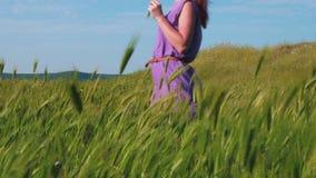 一件紫色礼服的红发女孩沿沿摇摆在风的绿草和小尖峰的领域的一条道路走 股票视频