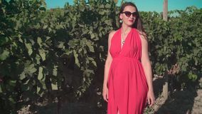 一件红色礼服的一个怀孕的女孩通过葡萄园走 有长发的一个怀孕的女孩在玻璃 股票视频