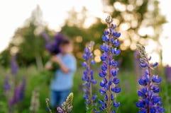 一件蓝色T恤杉的可爱的男孩有羽扇豆花束的在草甸 免版税库存图片