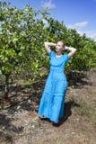 一件长的蓝色礼服的妇女在桔子的种植园,古巴 免版税库存图片