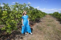 一件长的蓝色礼服的妇女在桔子的种植园,古巴 库存照片
