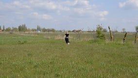一件黑礼服的一个美丽的女孩在她的手上跑与红色郁金香 股票录像