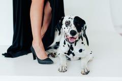 一件黑礼服的美丽的可爱的女孩有在白色背景的一条达尔马希亚狗的 免版税库存照片
