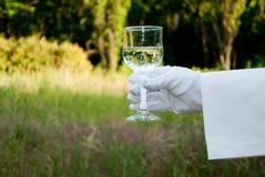一位侍者的手一副白色手套的拿着在自然的一块玻璃 免版税库存图片
