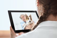 一位兽医的流动诊断有电信的或 库存照片